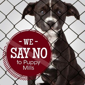 say no to puppy mills