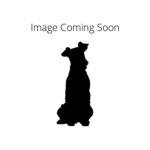 Petland Oklahoma City & Tulsa Redbone Coonhound